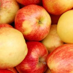 Apples (in box)